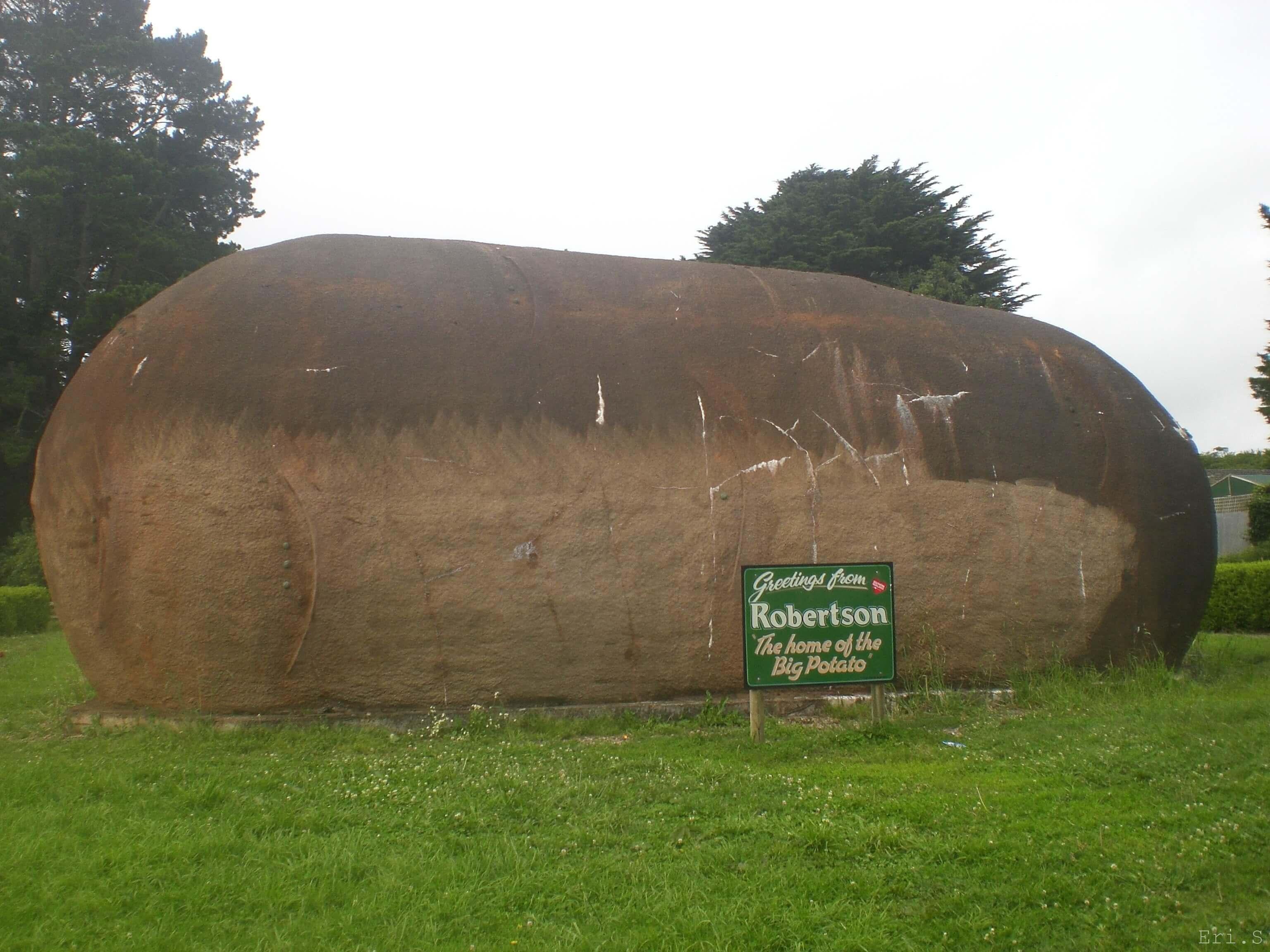 巨大なジャガイモ in Robertson