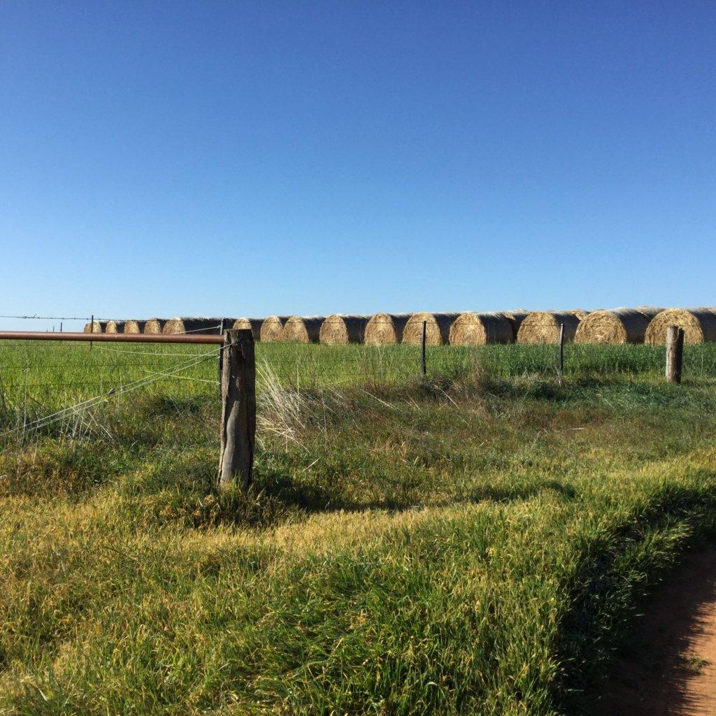 19世紀に開拓者で賑わった町Swan Hill