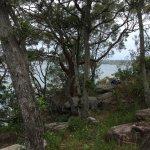シドニーハーバー国立公園でヨットレース見物