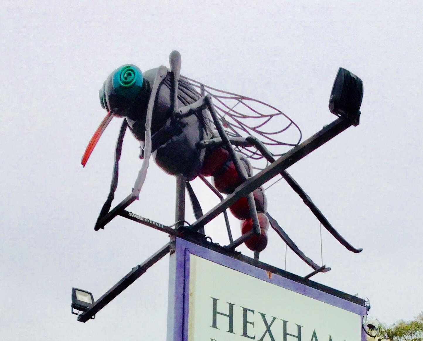 Hexhamのボーリングクラブにいる蚊