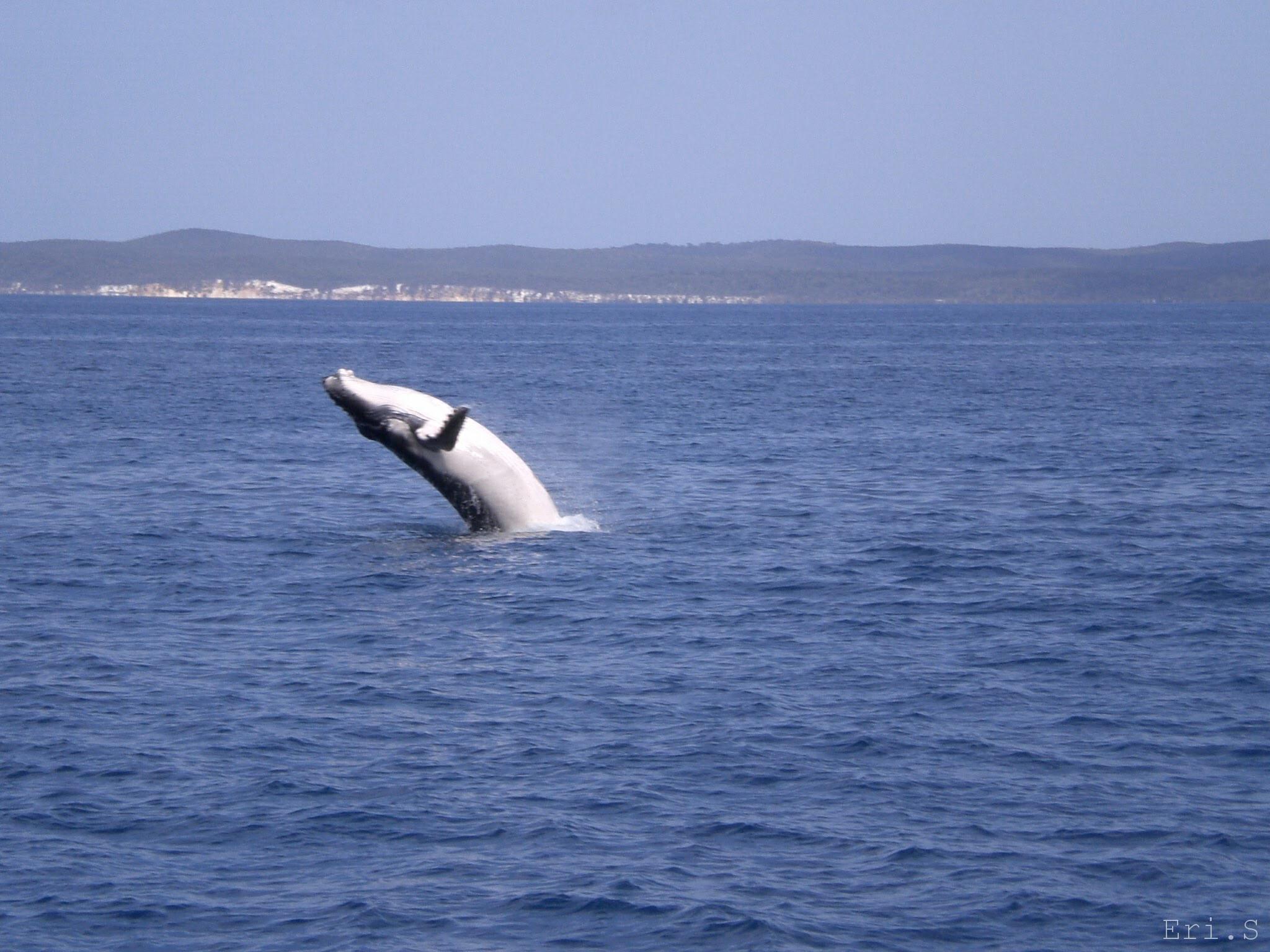 ハービーベイでクジラを見た話