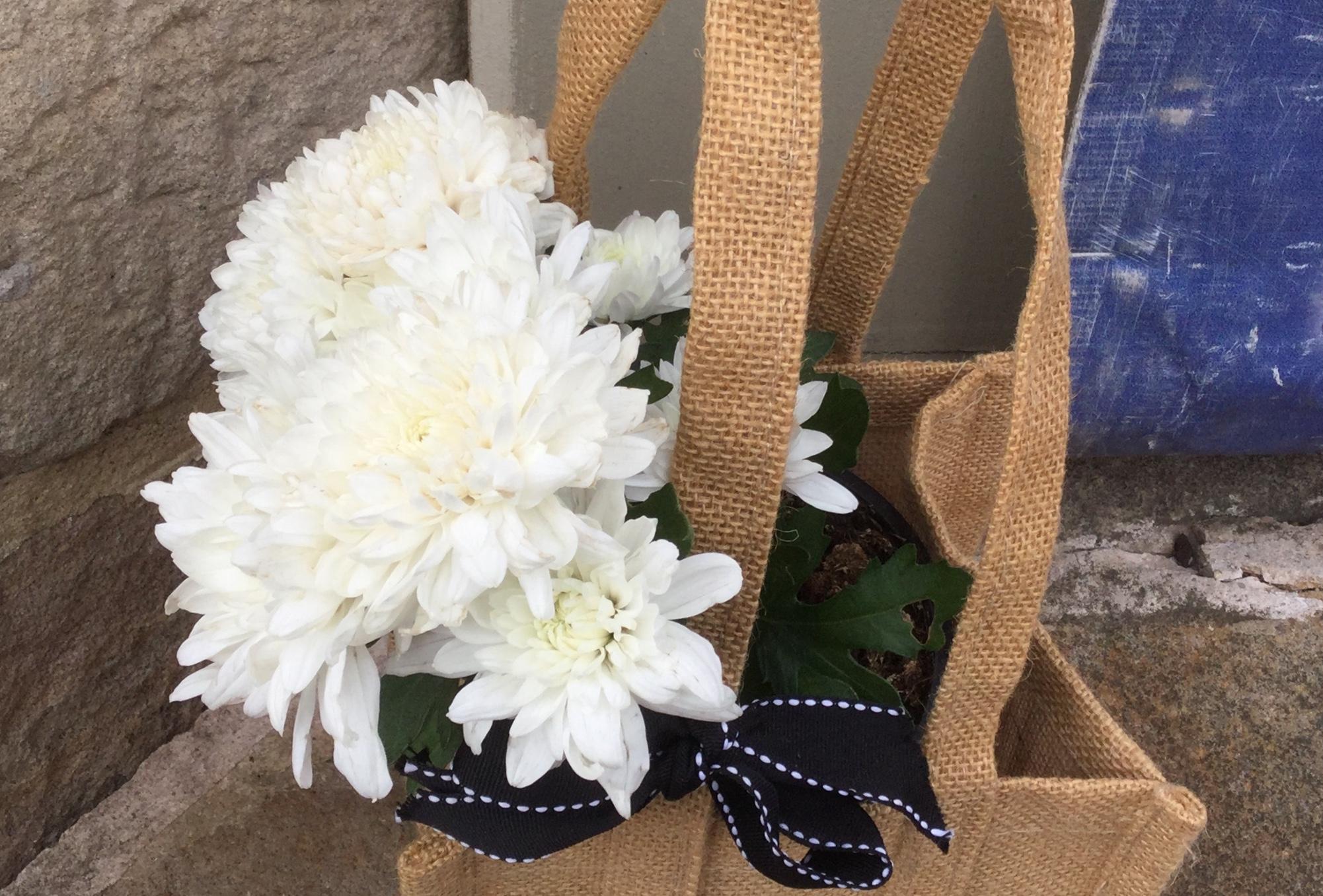 母の日には白い菊の花を