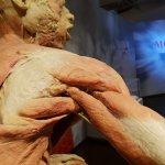 セラピストの為の解剖学用語 (骨格・筋肉) 日英表