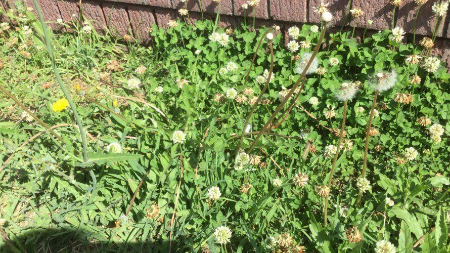 雑草のように生きれば良いじゃん。私は雑草が好き。