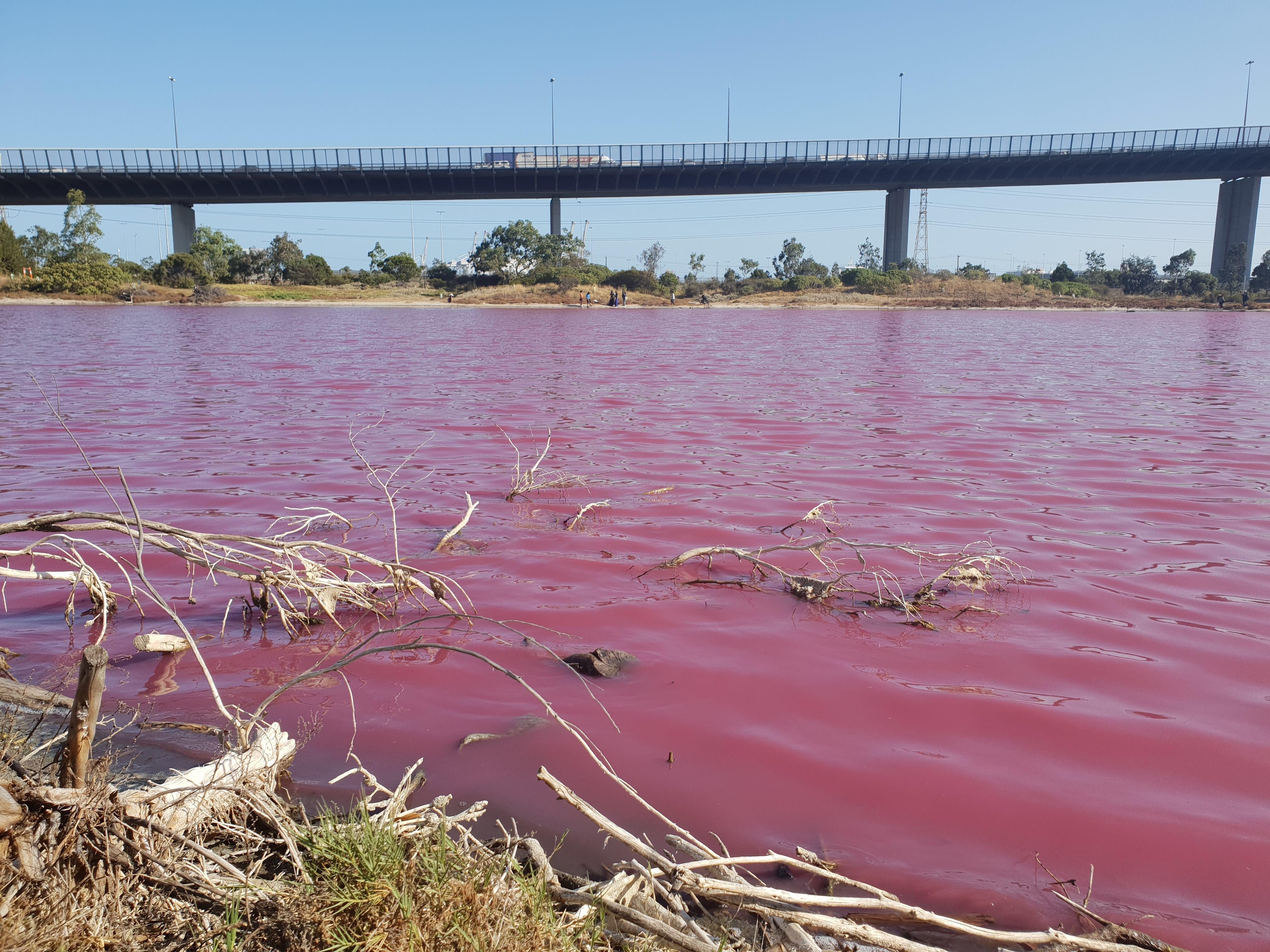 メルボルン西、期間限定でピンクに染まるウエストゲートパークの湖に行こう!