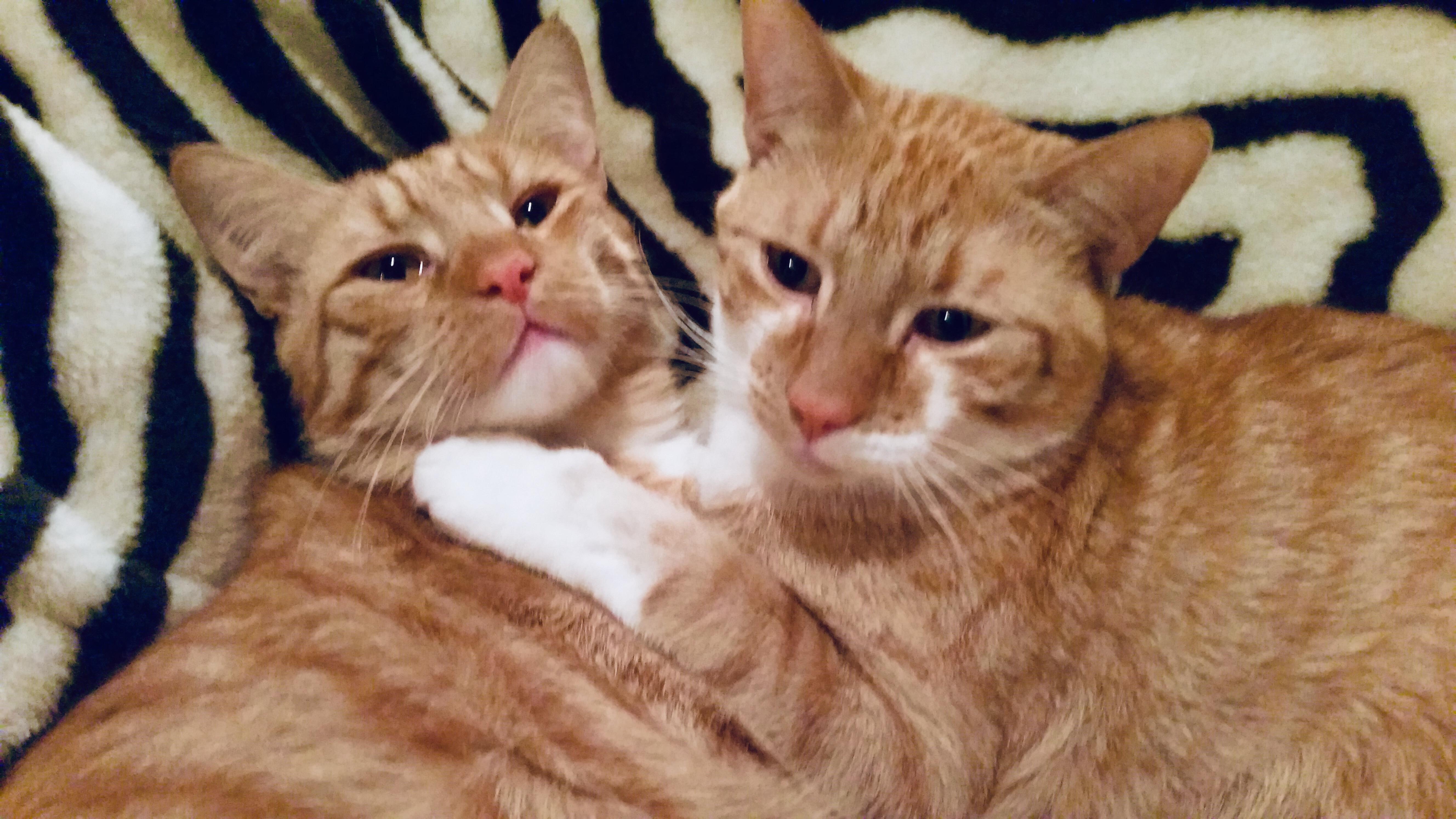 仲の良かった飼い猫たちが急に喧嘩をするようになったら、どうする?