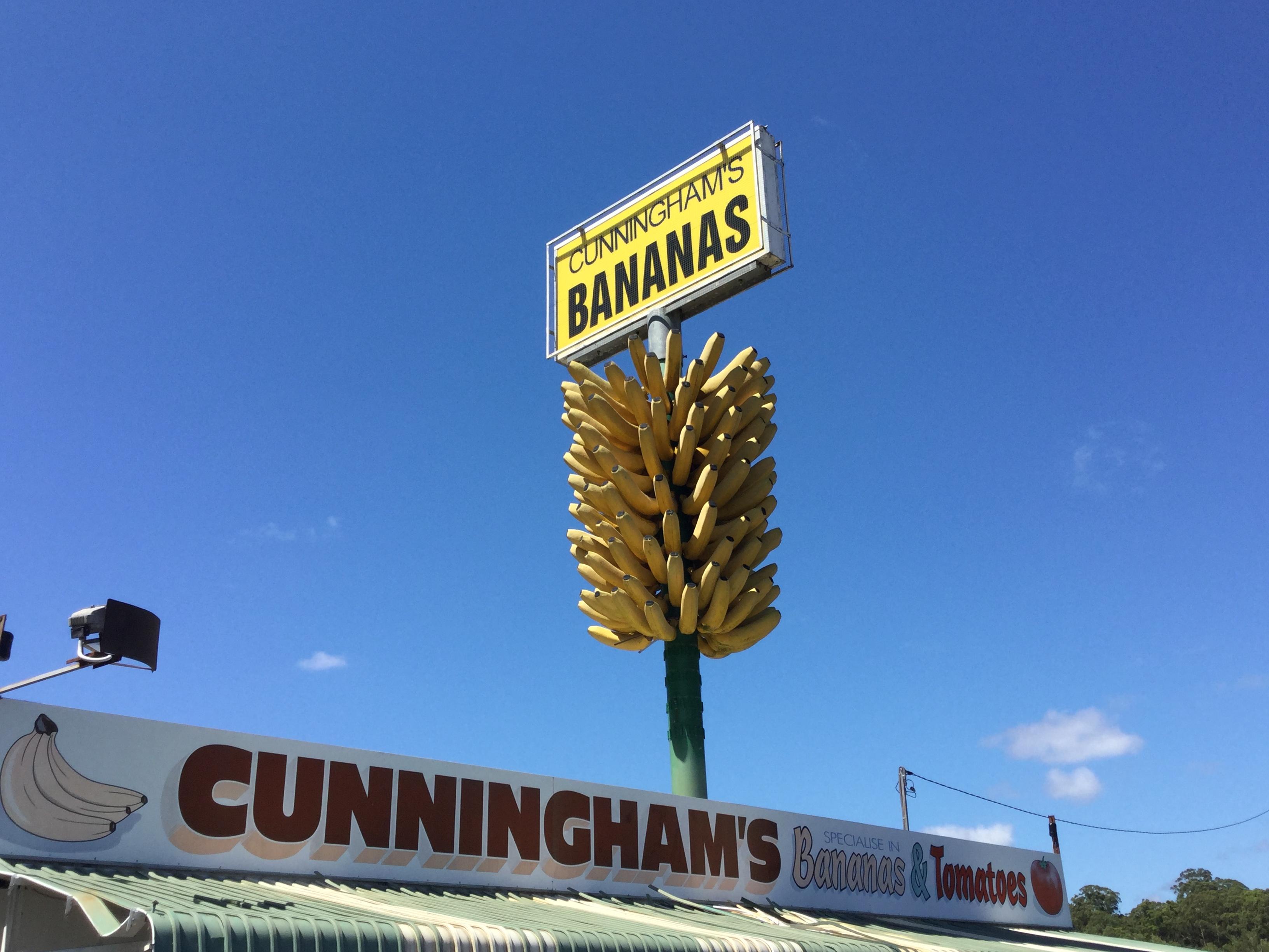大きなバナナの房が目印の八百屋さん in Coffs Harbour