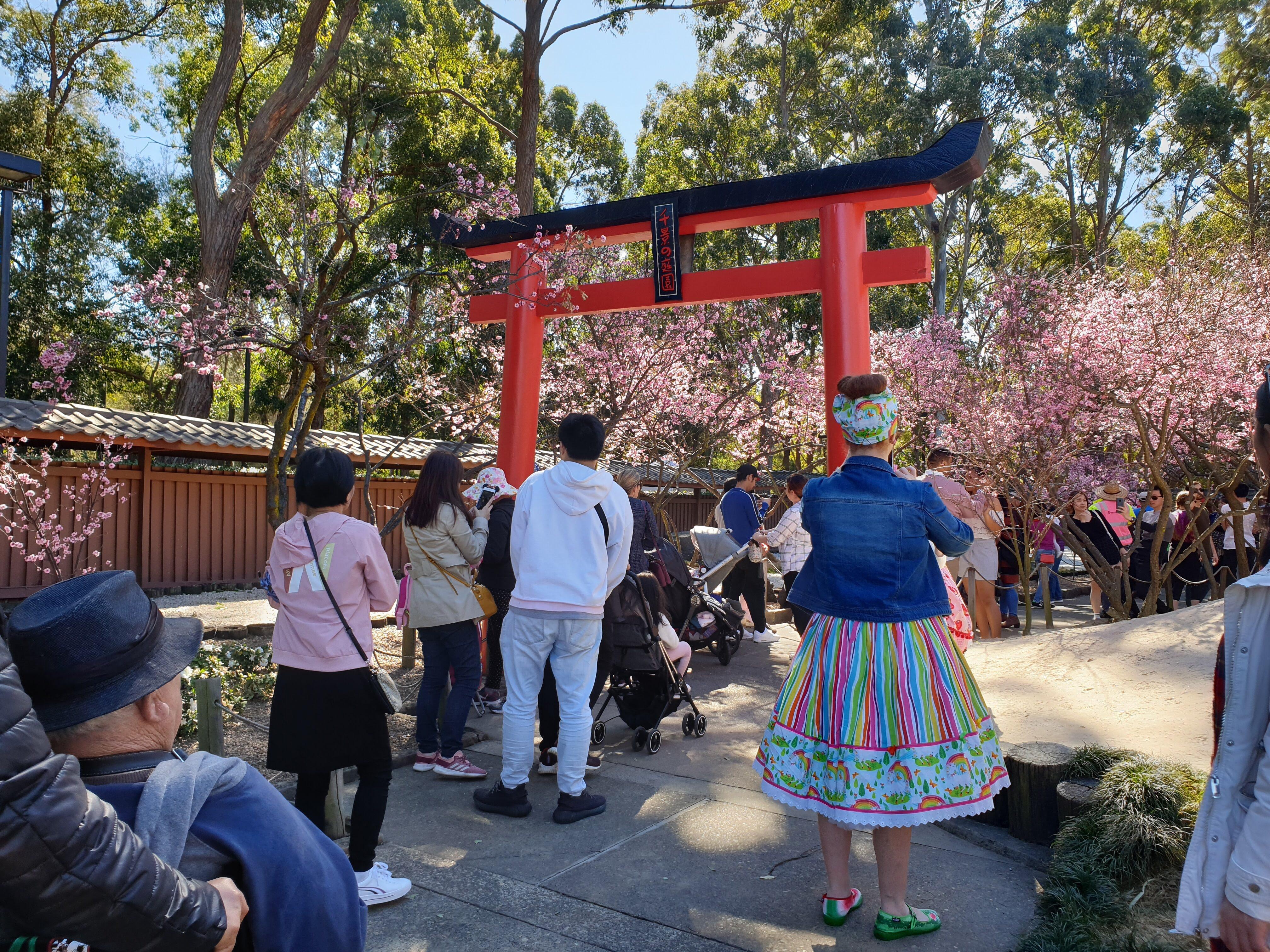 シドニーで桜!オーバンの Cherry Blossom Festival