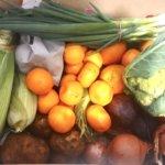 バトローのファームから取り寄せた珍しい野菜を少しだけ紹介