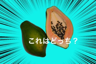ポーポー (Papaw) はパパイヤ (Papaya) じゃない⁉︎オーストラリアとニュージーランドでの区別の仕方