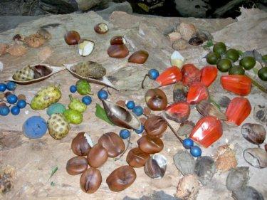 オーストラリア原住民アボリジニの伝統食材でヘルシーなブッシュタッカーとは
